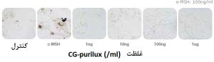 تغییر مورفولوژیکی در خط سلولی ملانوسیت ژل رووفیل